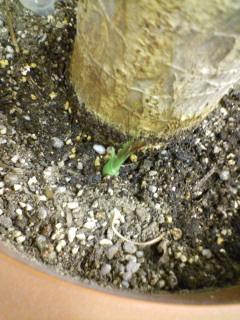 芽が出た!