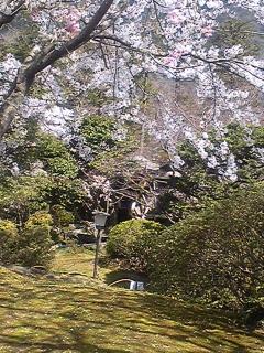 富士屋ホテルの庭